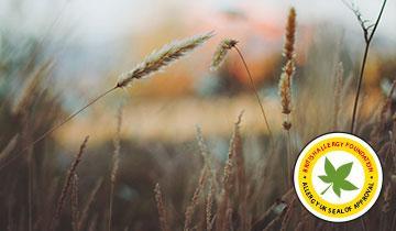 Forzaspira Lecologico Allergy_Turbo - Certificato da British Allergy Foundation